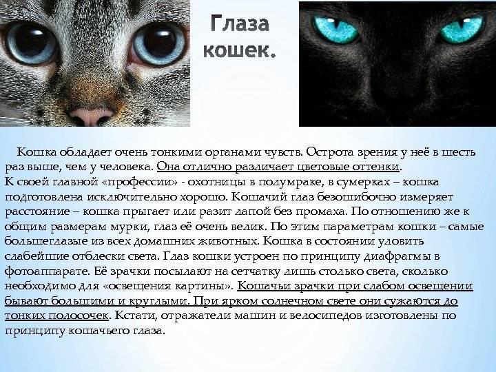 Черно-белая жизнь. видят ли животные цвета?