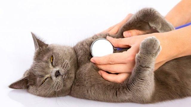 Почему кот поносит и рвет, как помочь животному?