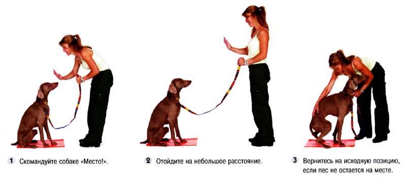 У вас появился щенок: что делать? - лайфхакер