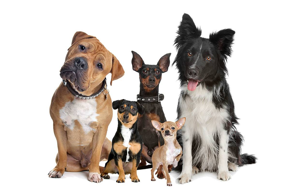 Гипоаллергенные собаки: список пород для квартиры