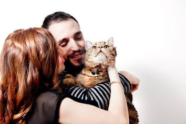 Счастливая кошка: 7 признаков