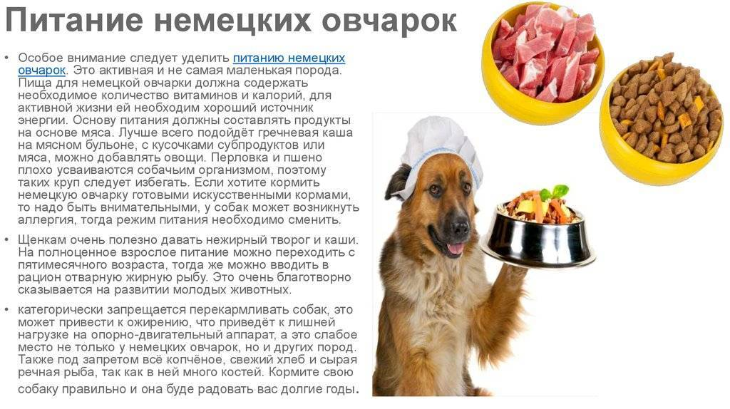 Можно ли кормить собаку свининой