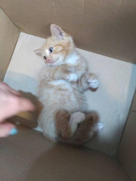Как пристроить котёнка?