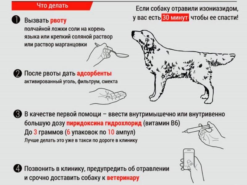 Сколько дней проживет собака или щенок совсем не потребляя еду и воду