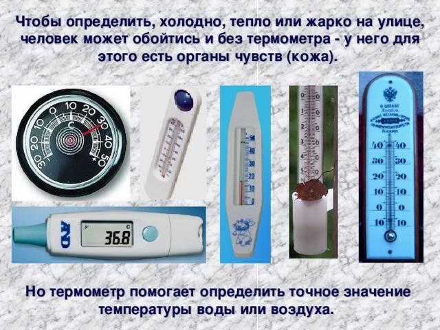 Как померить температуру кошке: способы и приборы для измерения