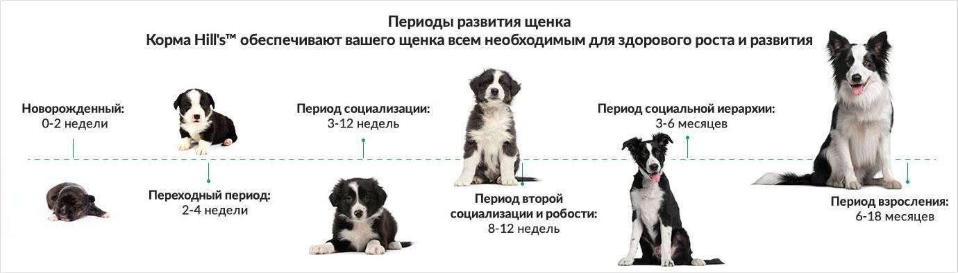 Алиментный щенок: что это, параметры, как заключить договор