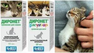 Когда и как нужно давать котенку таблетки от глистов?