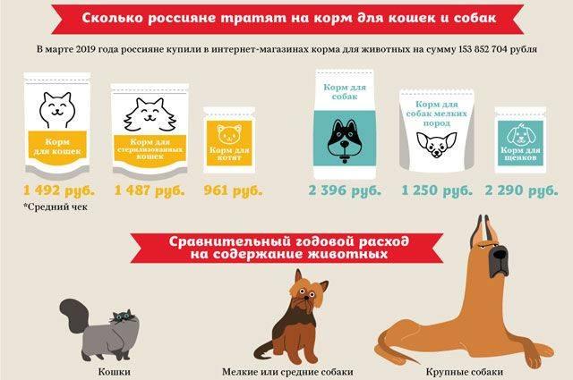 Ошибки, которые часто допускают владельцы собак при кормлении животных   великая эпоха