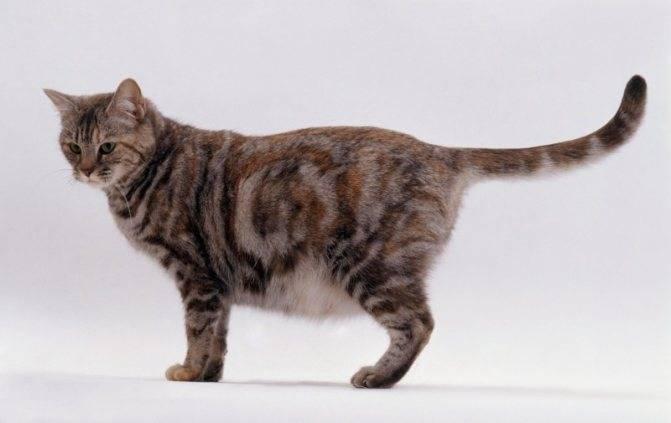 Как глистогонить кошку – способы введения препаратов, советы и рекомендации