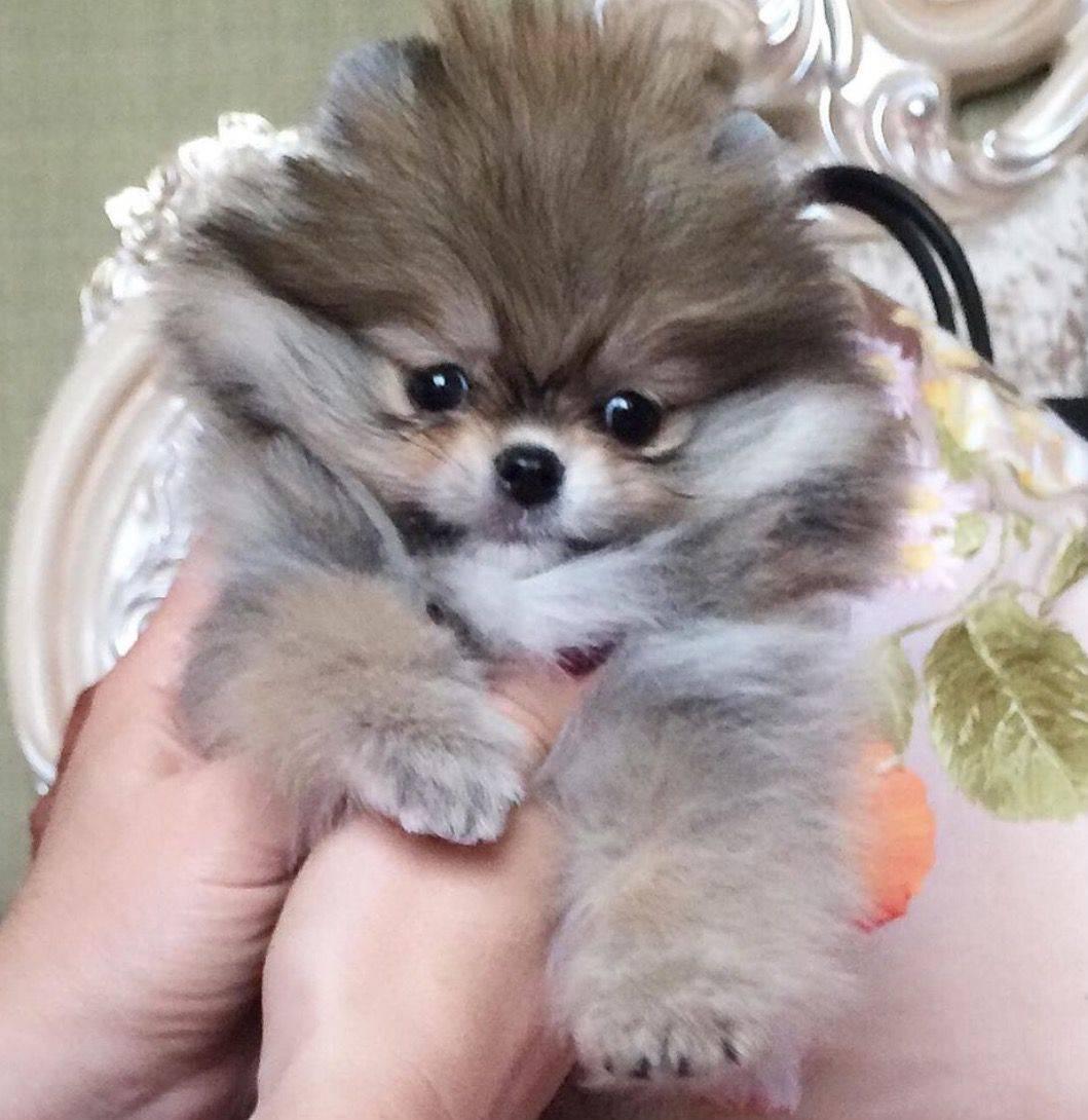 Самые пушистые собаки в мире - лохматые, большие, маленькие и другие породы