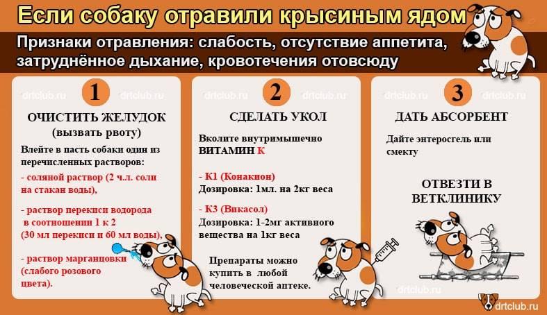 Отрава для собак: лечение отравления у собак в домашних условиях, как правильно определить симптомы