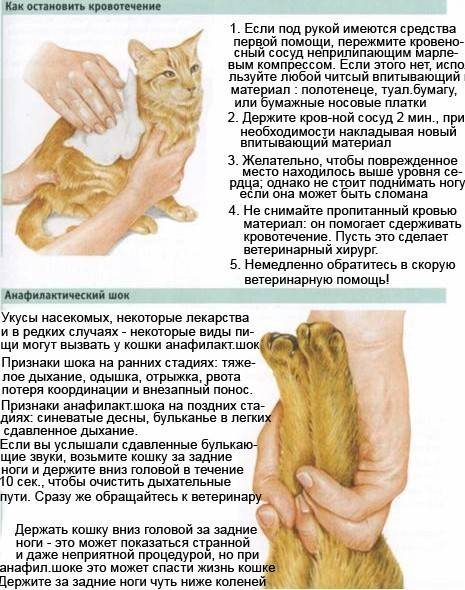 Почему кот или кошка чихает