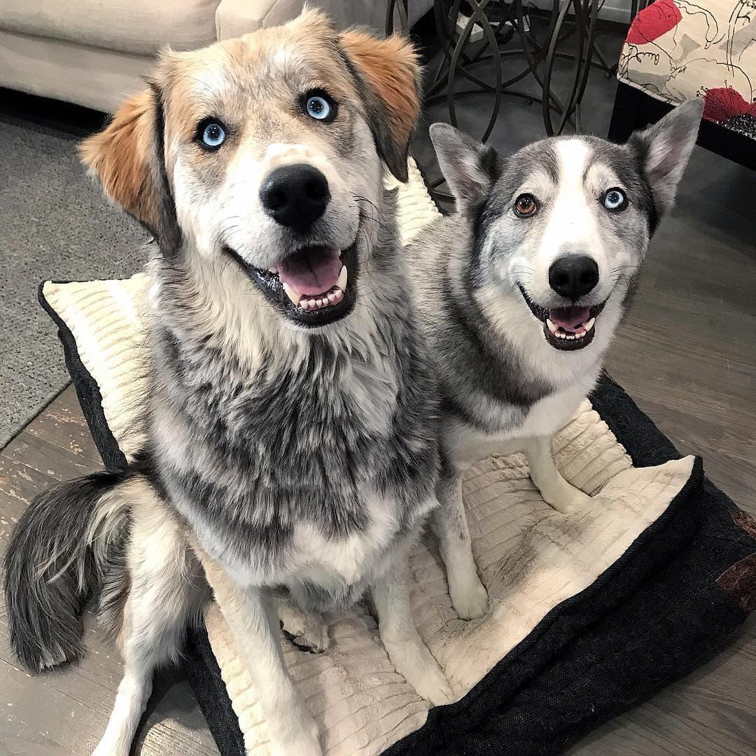 Подробное описание метисов собак и их отличия от породистых животных