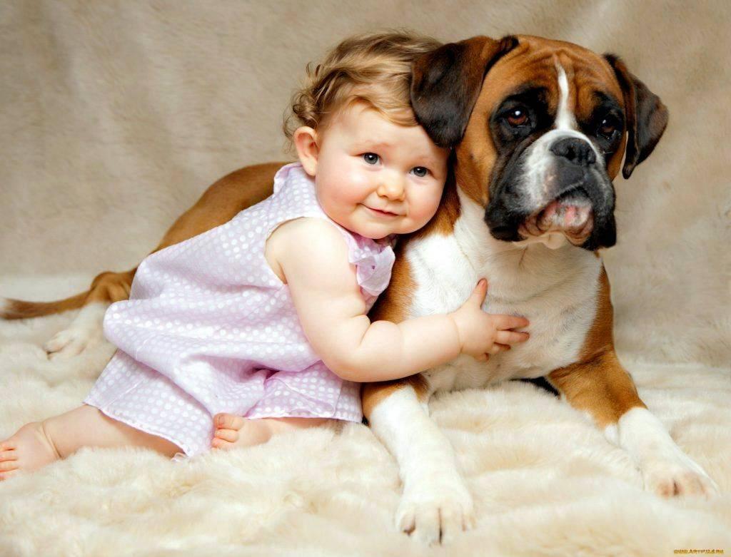 24 самых неприхотливых пород собак: от маленьких до великанов для содержания в квартире и доме