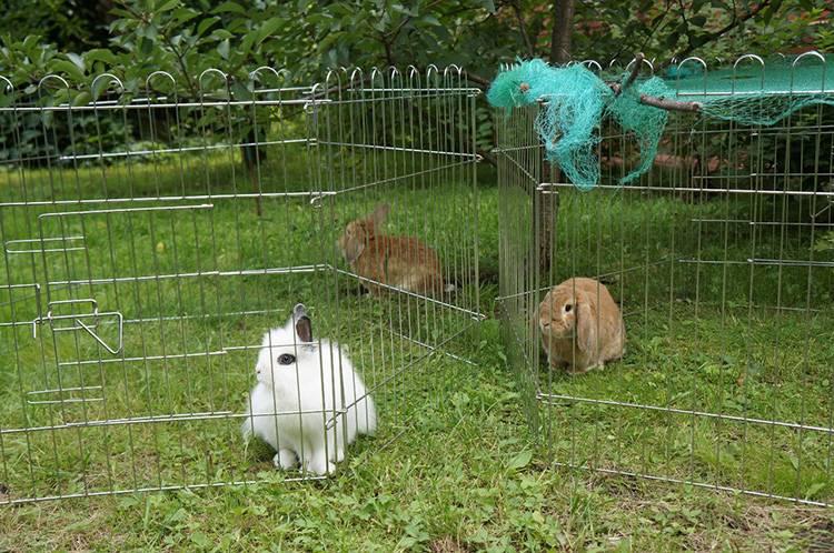 Разведение, выращивание и содержание кроликов в вольерах, как сделать своими руками: описание с фото и видео