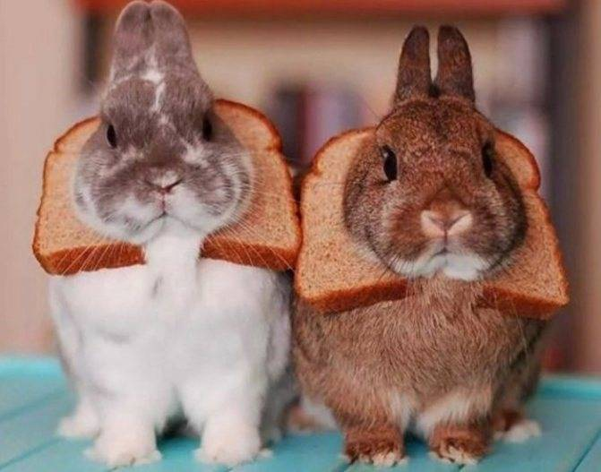 Можно ли кроликов кормить хлебом и сухарями, фото и видео - фермерам и дачникам