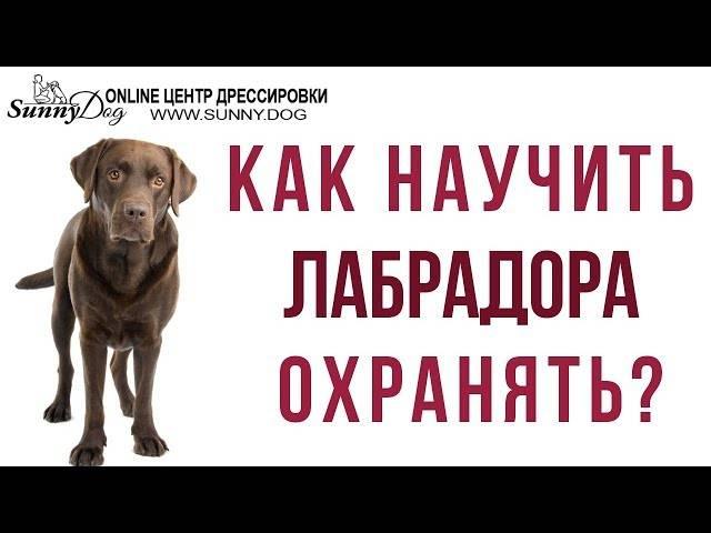 Как в домашних условиях научить собаку команде «фас!»: видеоинструкция