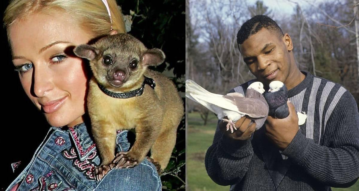 Питомцы звезд: фото домашних животных знаменитостей - 24сми