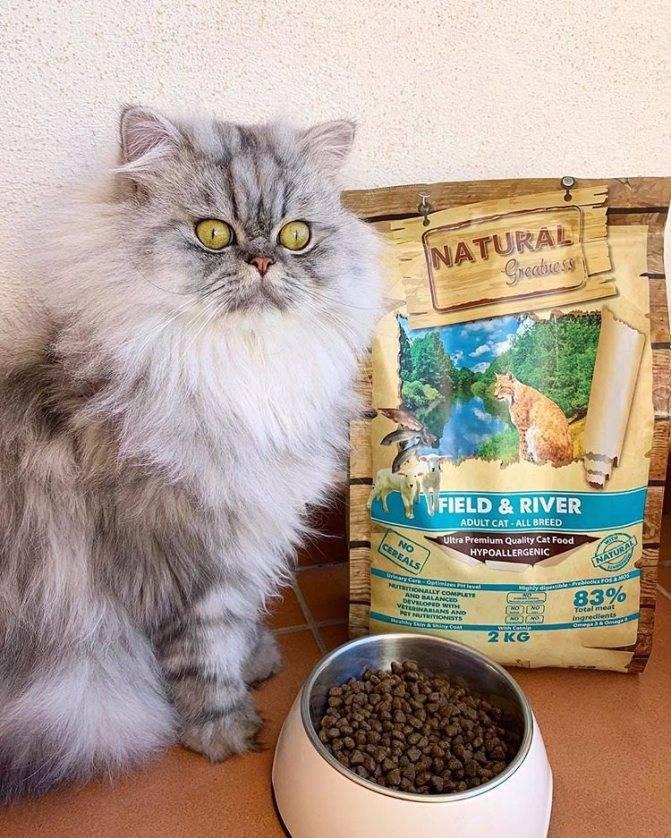 Подробная характеристика кормов gemon для кормления котенка и взрослой кошки