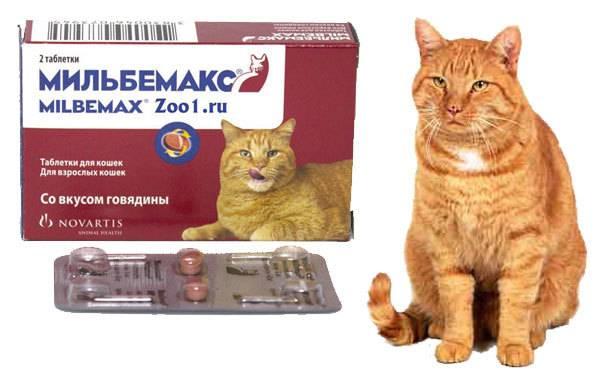 Мильбемакс для кошек: инструкция по применению, отзывы