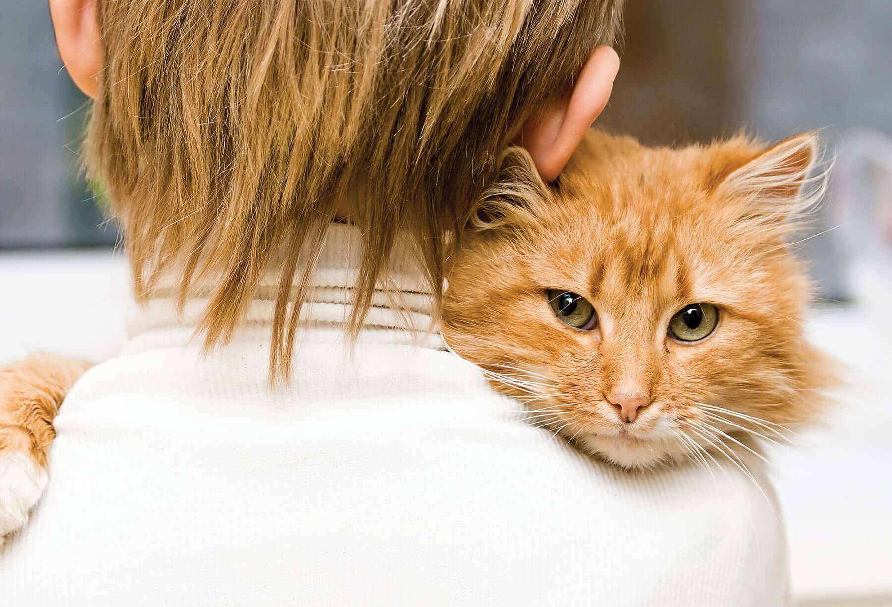 Понимают ли кошки человеческую речь: простые способы общения с питомцем