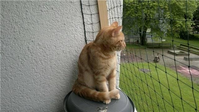 Кот спрятался в квартире и не отзывается или убежал из дома и потерялся на улице – как его найти, если он всего боится?