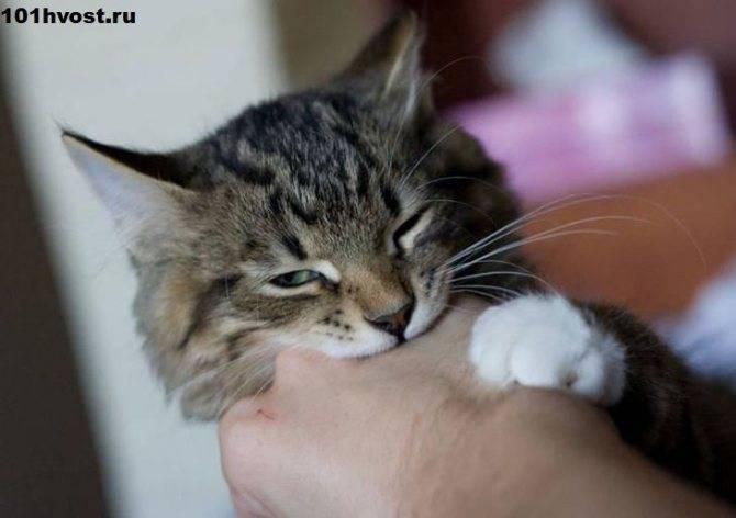 Что делать, если котенок царапает и кусает человека