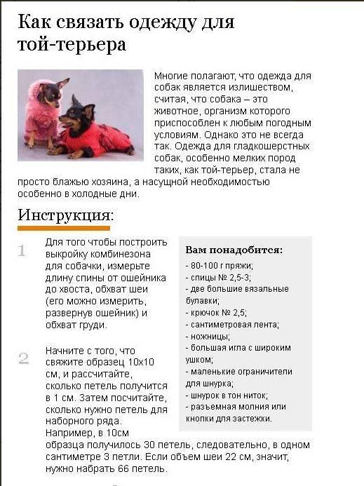 Выкройка комбинезона для йорка в натуральную величину, основы пошива одежды для собак