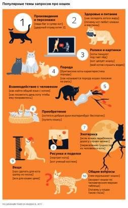 Можно ли оставлять кошку одну дома: надолго, на день