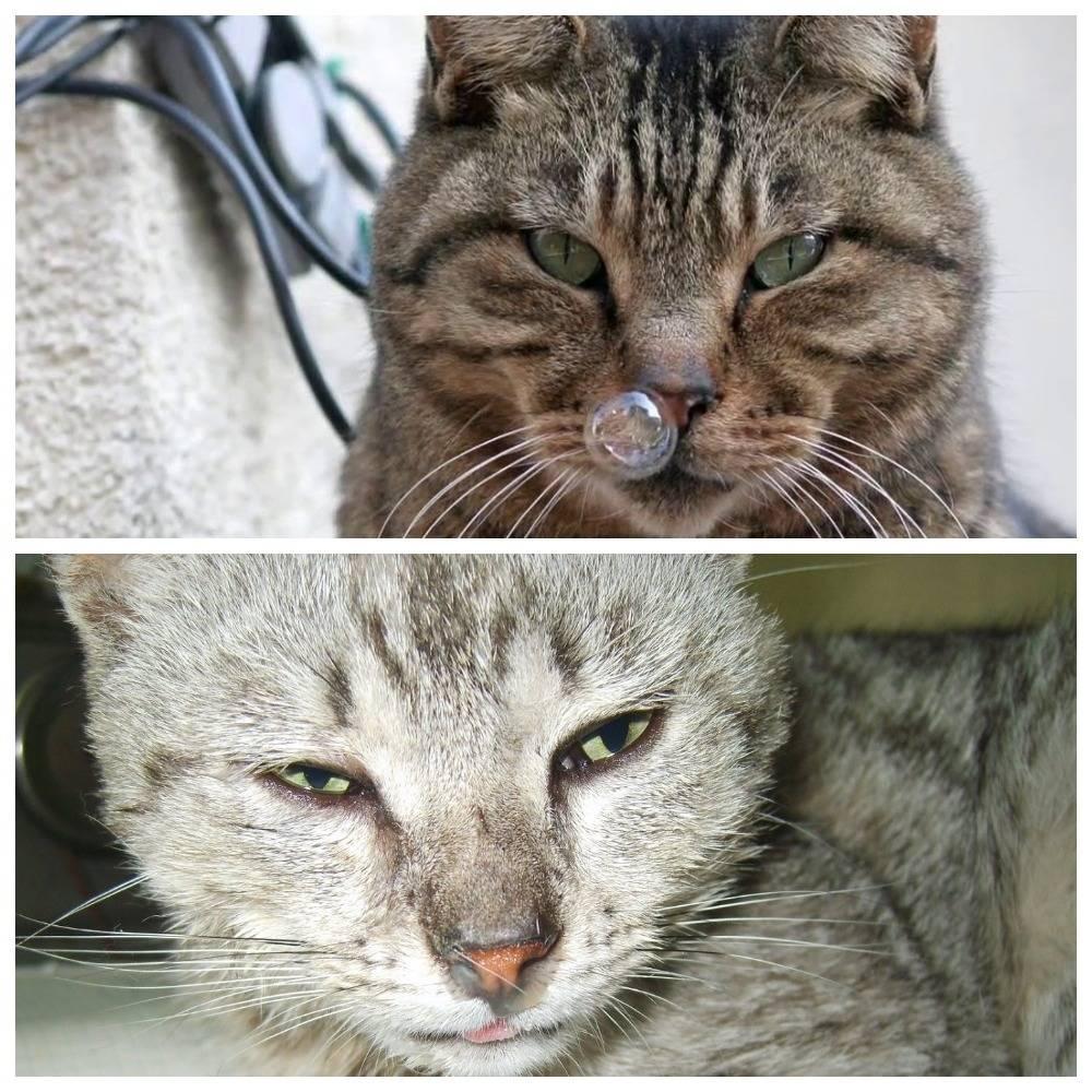 Может ли кошка заразиться от человека простудой?