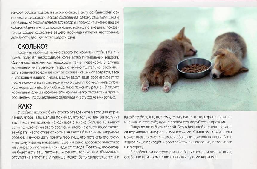 Сколько собака может прожить без еды
