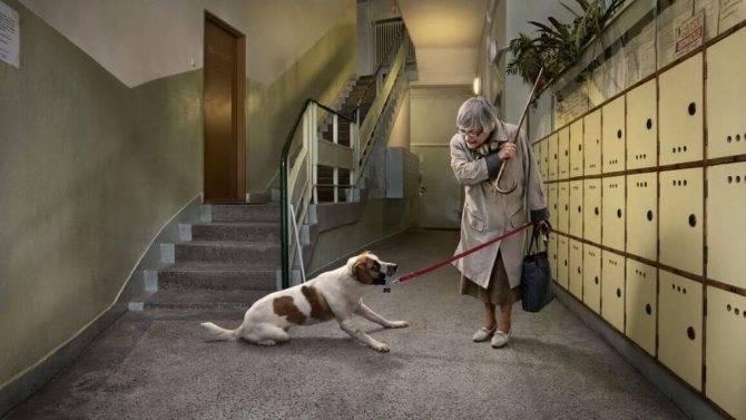 Как наказать собаку за непослушание: правила дрессировки, поддержание авторитета, виды наказания и рекомендации кинологов
