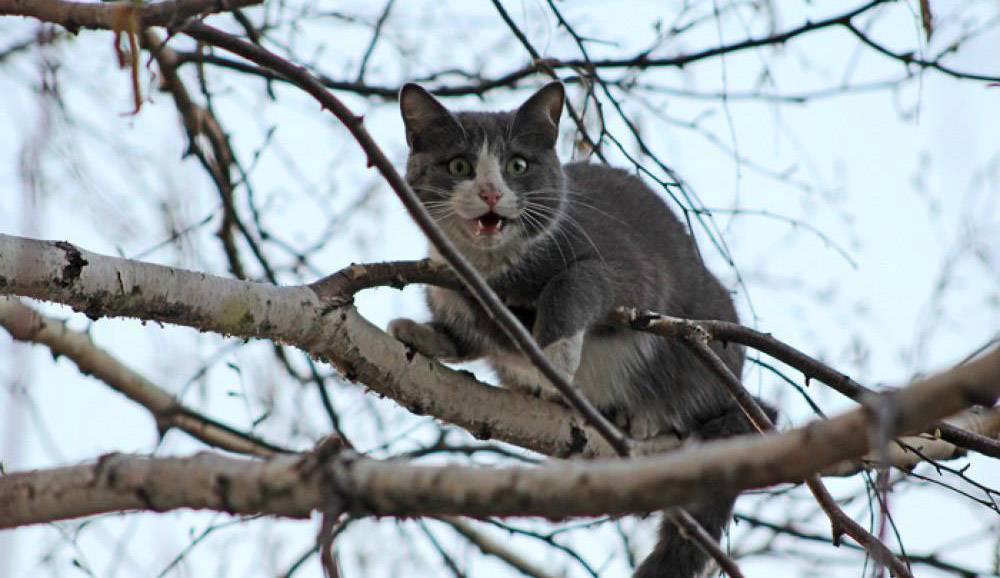 Как снять кошку с дерева: советы и рекомендации