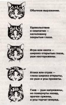 Особенности строения молочной железы у кошки - кошки и собаки простыми словами