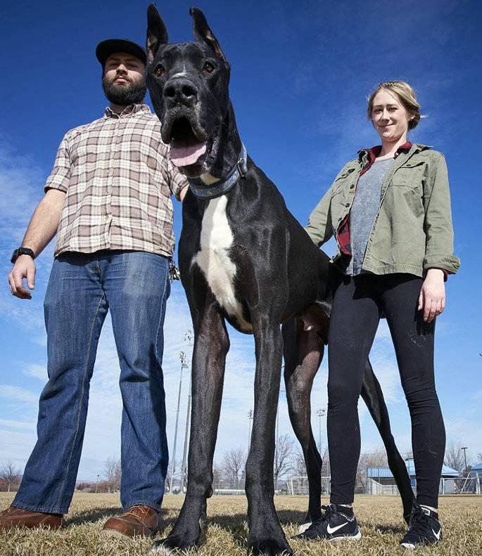 Большие породы собак - названия и фото (каталог)