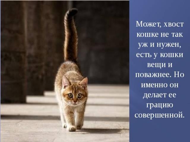 Почему кошка шевелит или виляет хвостом, машет им в разные стороны, что это значит?
