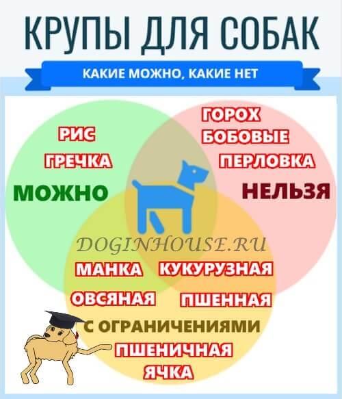 Какие крупы можно давать собакам?