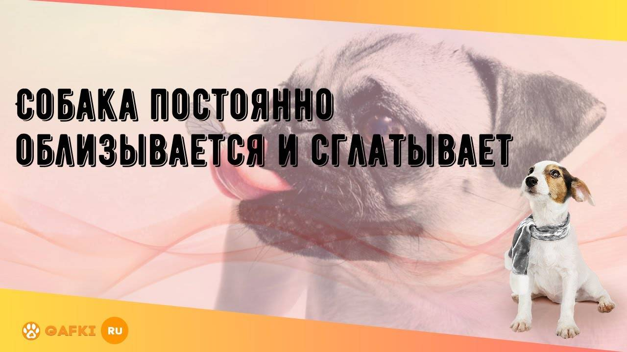 Собака делает глотательные движения и облизывается. собака постоянно облизывается и сглатывает