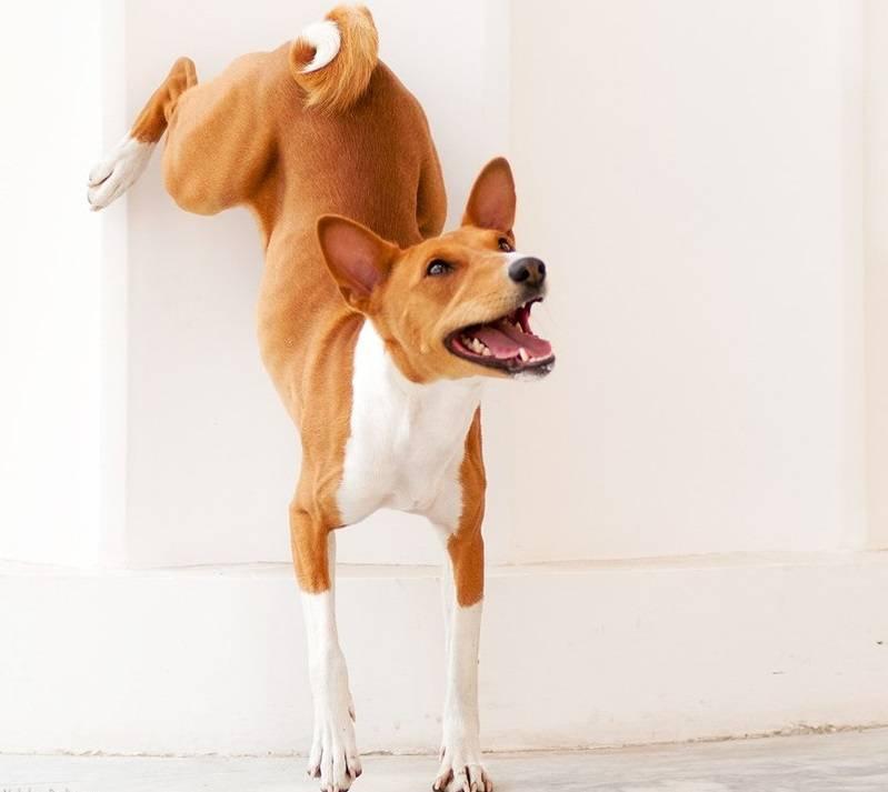 Почему собака не лает на чужих людей