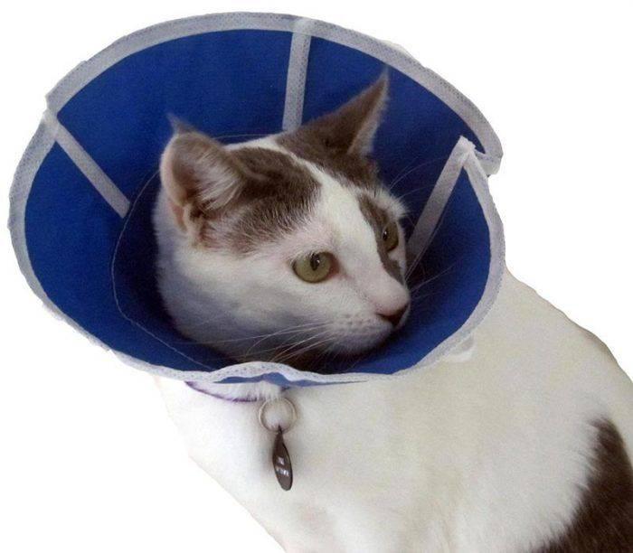 Попона послеоперационная для собак №4. гигиена. ветпрепараты. ветеринарная аптека «зоофарм»