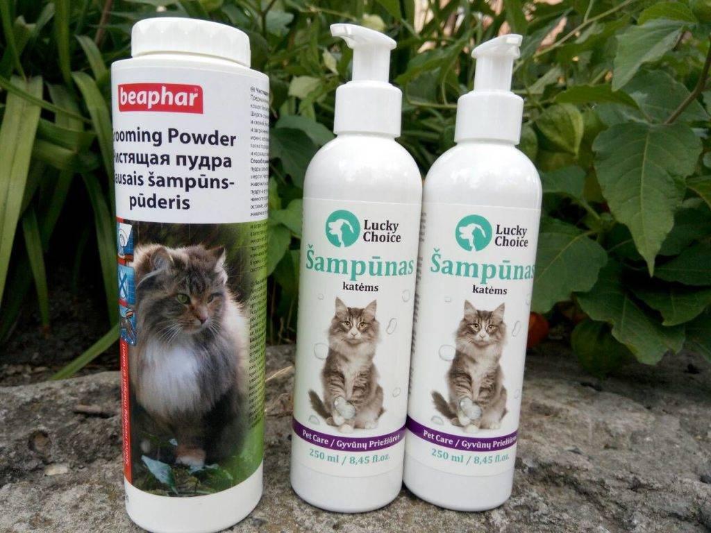 12 лучших шампуней для кошек и котов - рейтинг 2020