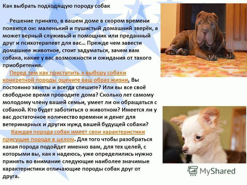 Как  выбрать собаку правильно, какую породу собак выбрать, какую собаку выбрать для охраны, для защиты, для семьи