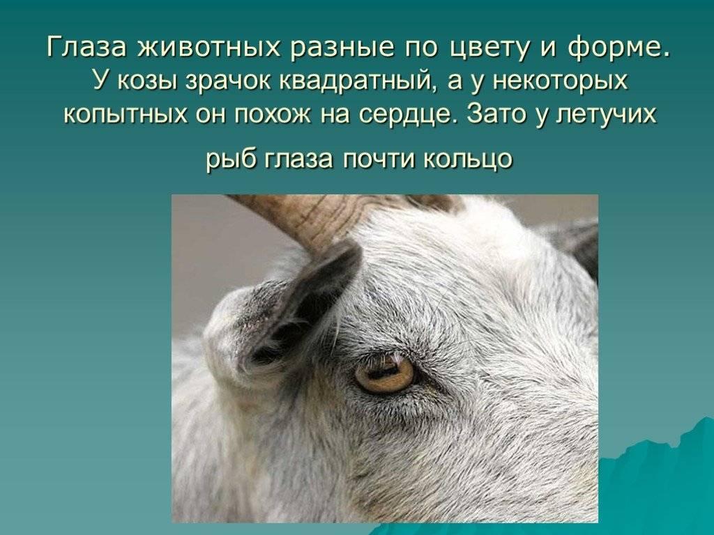 Как видят собаки наш мир по сравнению с нами?