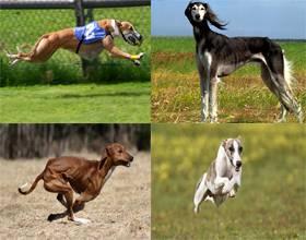 Самое быстрое животное в мире: топ 10 скоростных животных