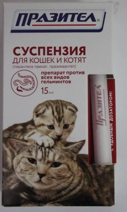 Суспензия от глистов для кошек: виды, преимущества, как дать