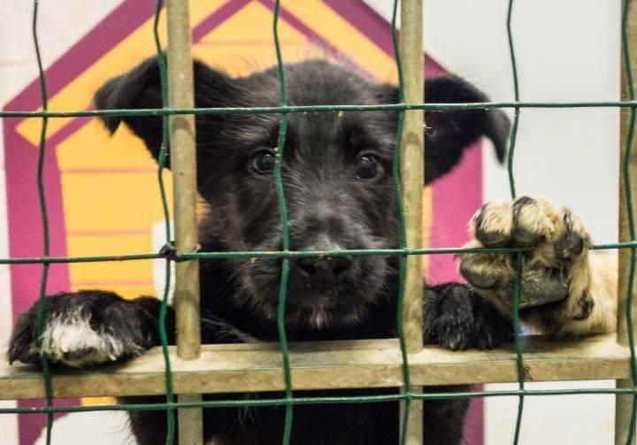 Приюты в москве: где находятся приюты в москве и из какого приюта взять животное