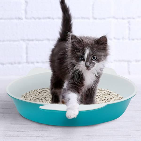Как приучить котенка к туалету: варианты как заставить ходить в лоток
