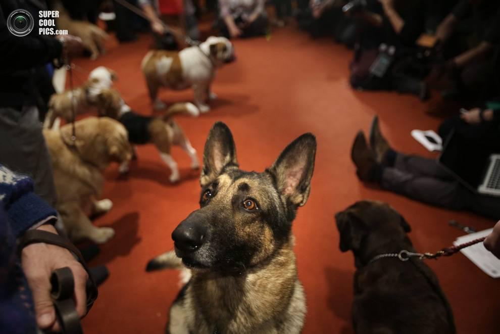 20 самых популярных собак в мире и россии