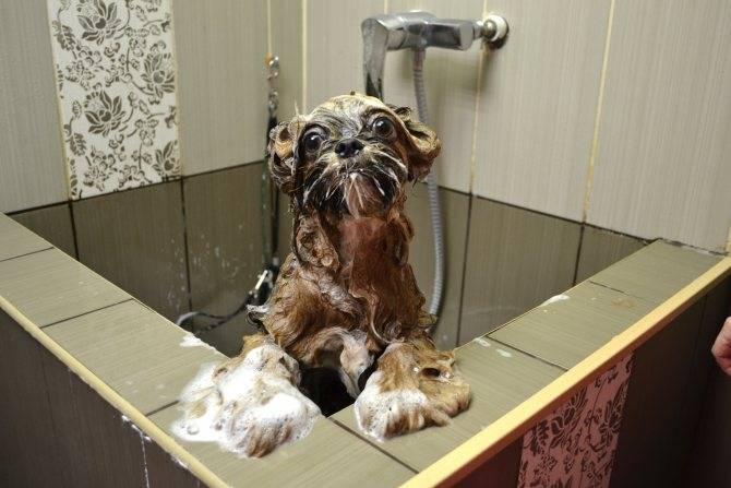 Как избавиться от запаха собаки в квартире: практические советы