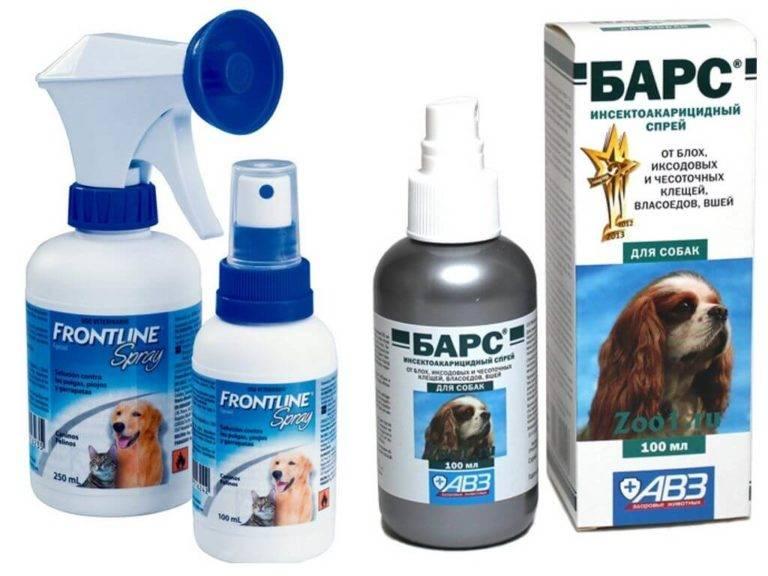 Как избавить кошку от блох: капли, шампуны, спреи, ошейники, таблетки